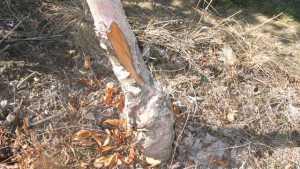 USDA Farm Service Agency Announces Tree Assistance Program Sign-up