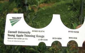 Cornell's Young Apple Thinning Gauge helps  growers balance crop load and vegetative growth. See how it works.