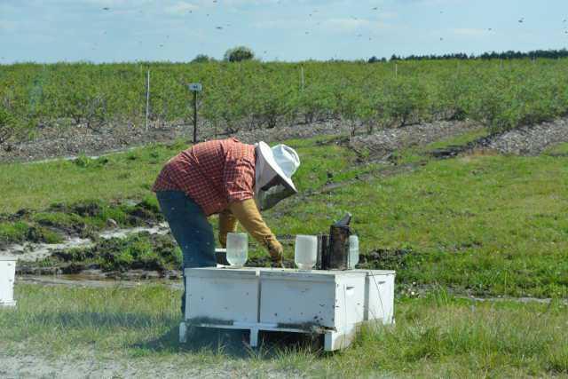 Handling honey bees