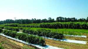 Record Number Of Organic Producers In U.S.