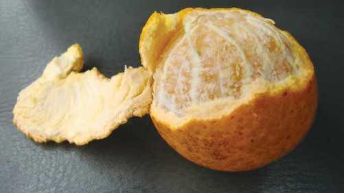 Experimental Citrus Scion Selection Program Poised For Progress