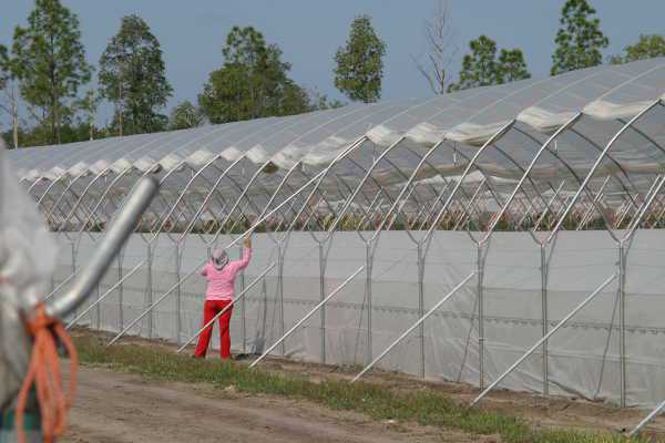 A farmworker checks the supports of a hoop house