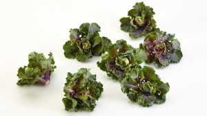 Brussels Sprouts And Kale Hybrid To Debut