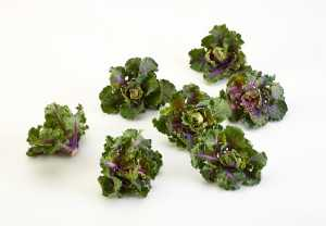Kalettes 4 for web