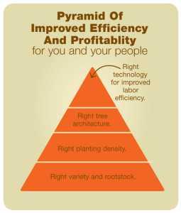 Mario's-pyramid-of-improved-efficiency-and-profitablilty