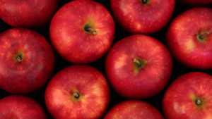What's In An Apple Cultivar's Name?
