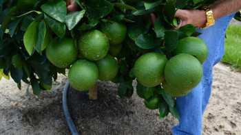 Scott Lambeth Citrus