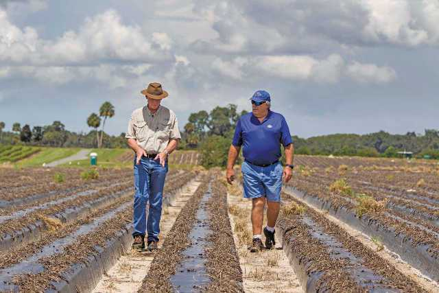 Dr. Joe Noling (right) UF/IFAS walks a field with strawberry grower Dudley Calfee in Floral City, FL. Photo by Mark Wallheiser, FDACS