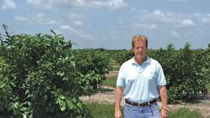 Florida Grapefruit Grower Goes All In To Save Groves