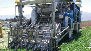 Taylor Farms uses three mechanical harvesters built by California-based Ramsay Highlander, who also owns the patent for the equipment. The harvester, designed to handle Romaine and green leaf crops, uses a patented water jet system to cut the vegetables.  Photo courtesy of Frank Maconachy
