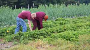 Midwest Grower Voices Concern About Immigration Reform