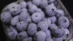 What U.S. Consumers Think About Florida Blueberries