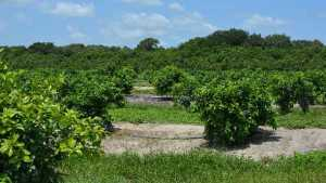 Consolidated Citrus Eyes Giant Planned Agricultural, Employment Center Project