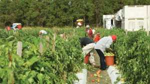 Fixing Farm Labor Woes Worth The Extra Effort [Opinion]