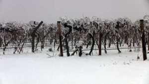 'Super Cold' Winter, Sizzling Summer On Tap In 2015 Farmer's Almanac