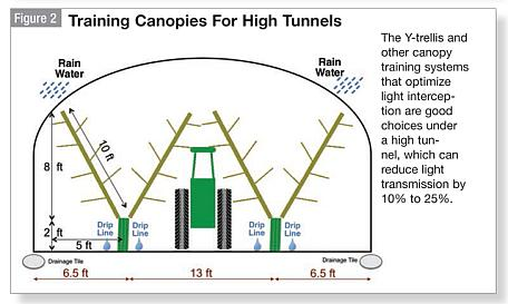 What To Consider When Growing High Tunnel Sweet Cherries