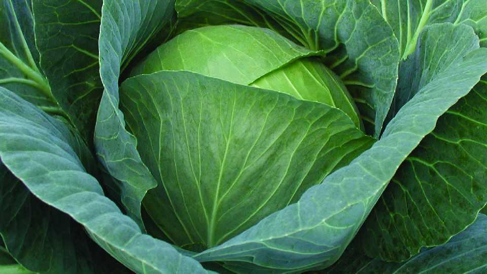 Reed's Seeds 2015 Vegetable Variety Showcase