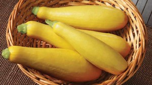 7 Cutting-Edge Cucurbits Fitting For Florida Farmers