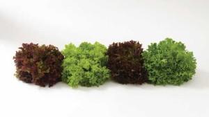 13 Lovely Leafy Green Varieties [Slideshow]