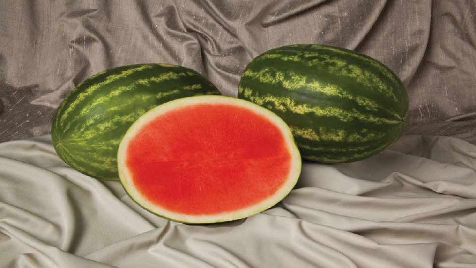 Sweet Polly Watermelon