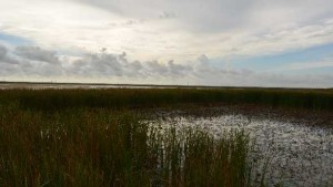 South Florida Farmers Feted For Water Quality Standards
