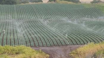 field USDA