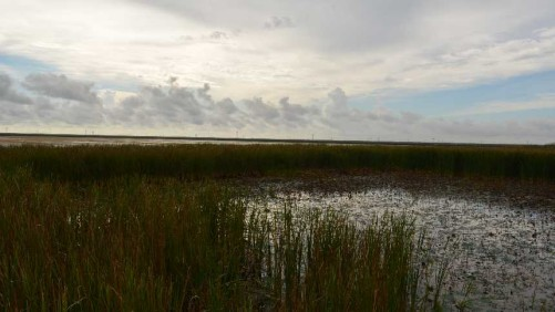 BMPs Key to South Florida Water Quality Success