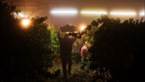 Sonoma County Grape Growers Commit To Helping Local Farmworkers