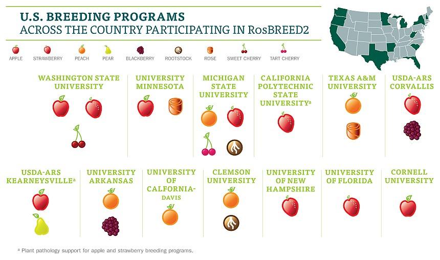 RoseBREED programs