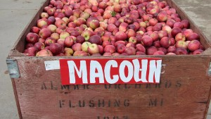 Growers Encouraged To Monitor Fruit Temperature Going Into Storage