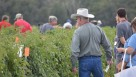 Florida Ag Expo attendees get a first-person perspective of prospective releases from the UF tomato breeding program. Photo by Frank Giles