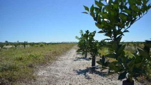 Help On The Way Citrus Growers Can Truly Tap Into