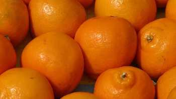 bunch of oranges