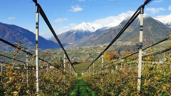 Stephan Klotzner's orchard, in the town of Schenna Meran, is 700 meters above sea level and sports some spectacular views. (Photo credit: Win Cowgill)