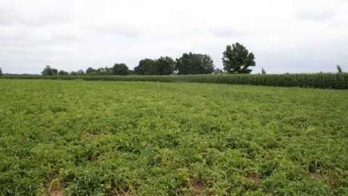 2014 Fall Potato Harvest Estimated To Be Slightly Larger Than 2013