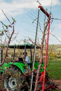 A mechanical string thinner reduces crop load at bloom on trees in a  perpendicular-V training system. (Photo credit: Edwin Winzeler, Penn State University)