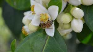 Pollinator Protection Dependent On Pure Partnerships [Opinion]