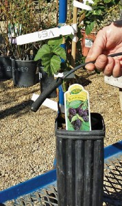 Deep Root Irrigation System