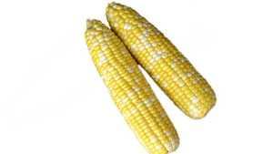 Abbott & Cobb Sweet On New Sweet Corn Technology