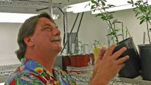 Is A GMO Citrus Tree The Silver Bullet For HLB?