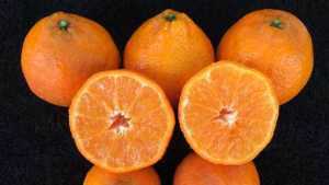 Another Player Goes To Bat For Citrus Research