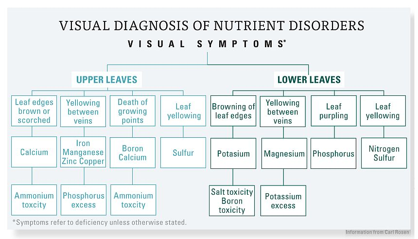 symptoms of nutrient disorders