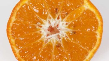 7-6-27 mandarin hybrid