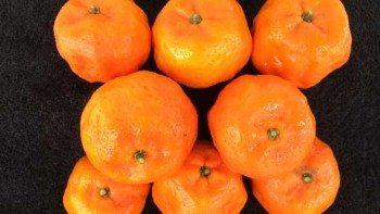UF Glow mandarin