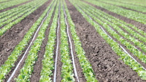 Marrone Bio Innovations To Distribute Isagro's Bio-Tam 2.0 In The Western U.S.