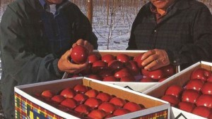 Brothers Grow Premium Washington Apples By Targeting Size Buyers Want