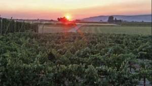 Washington Winegrape Harvest Earlier Than Ever
