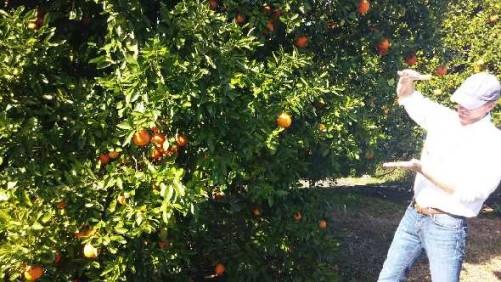 Priority High On Producing Proprietary Citrus Varieties