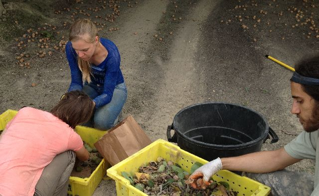 UC researchers sort nuts, hulls and other scraps to measure N content.