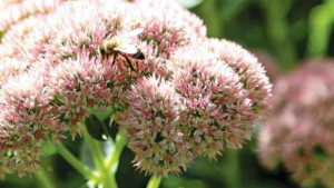 Research Project Puts Priority On Pollination